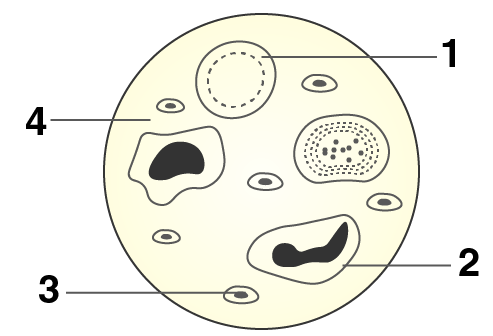 Selina Solutions for Class 10 Biology Chapter 8 Image 1