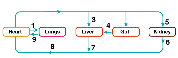 Selina Solutions for Class 10 Biology Chapter 8 Image 4