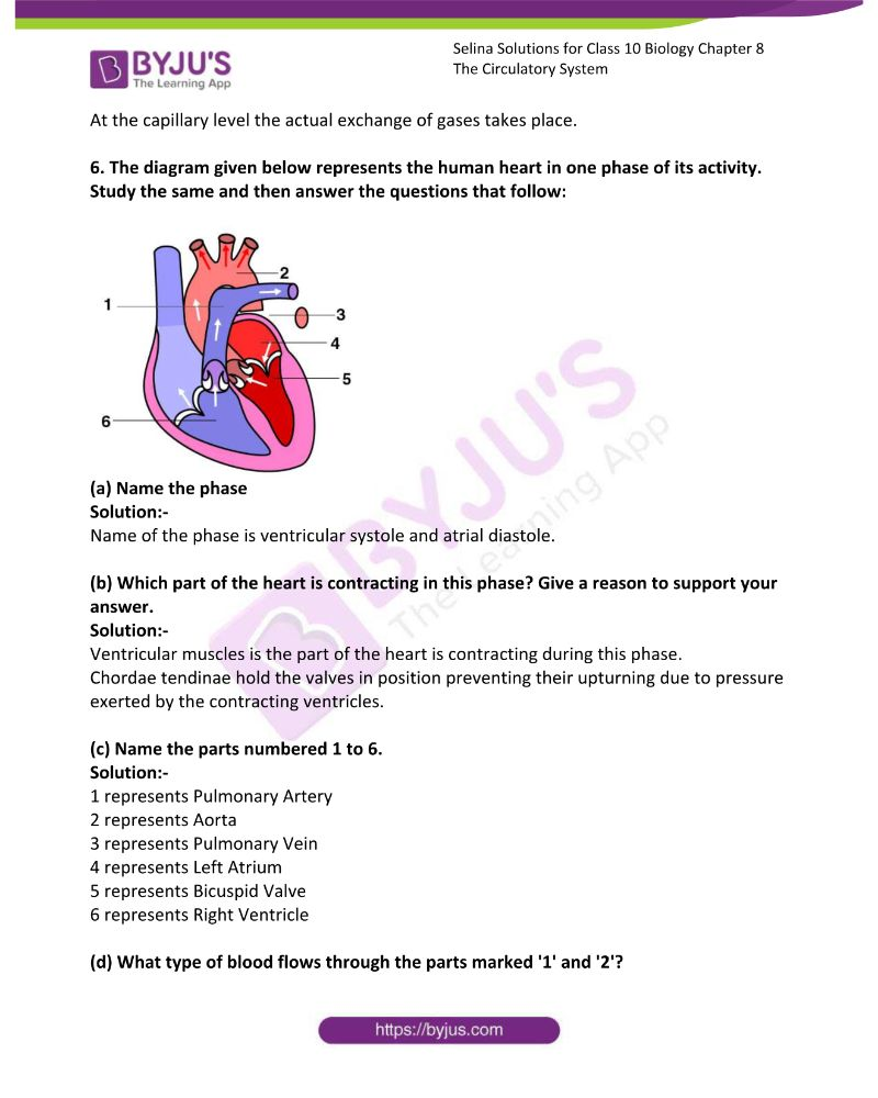 Selina Solutions For Class 10 Biology Chapter 8 The Circulatory System 19