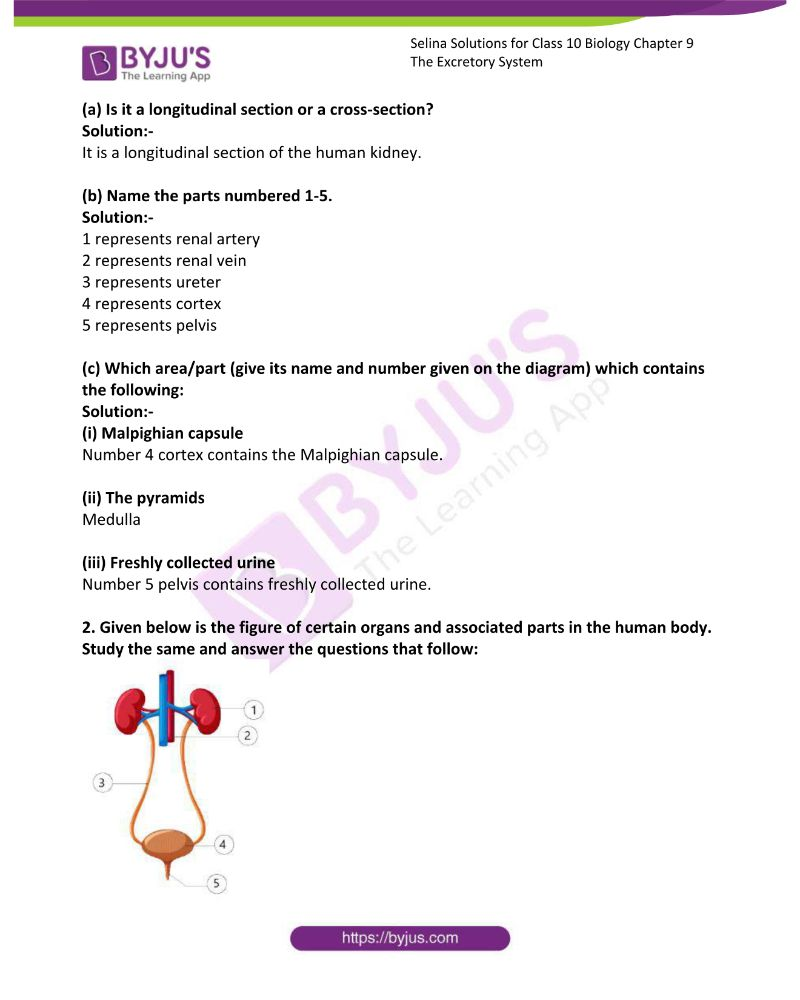 Selina Solutions For Class 10 Biology Chapter 9 The Excretory System 8