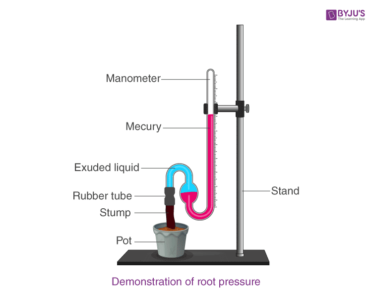Demonstration of Root Pressure in plants