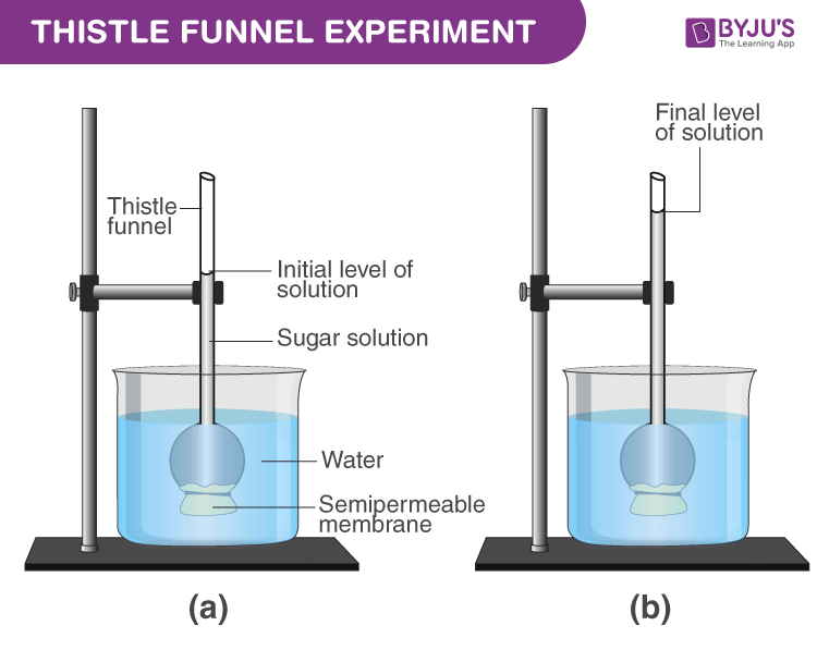 Thistle funnel experiment