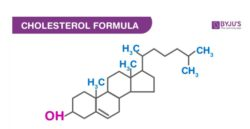 Structure Of Cholesterol
