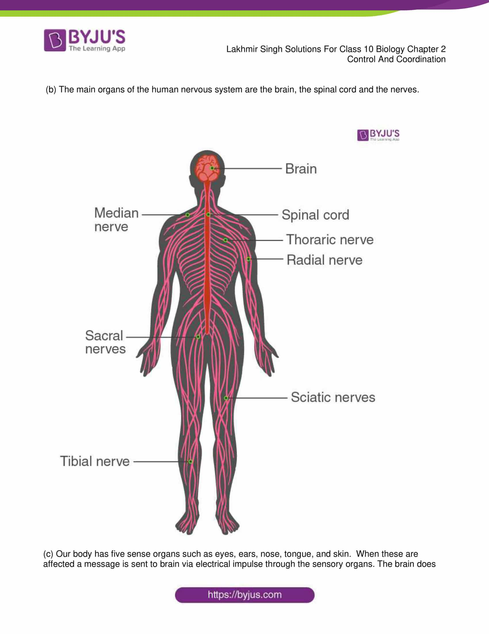 lakhmir singh sol class 10 biology chapter 2 38