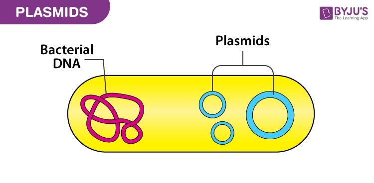 Plasmids in bacterial cells