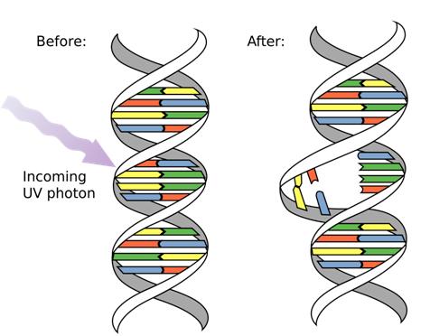 External effects of Mutations