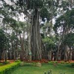 National Symbol of India - National Tree of India