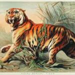 National Symbols of India - National Animal of India