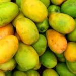 National Symbols of India - National Fruit of India