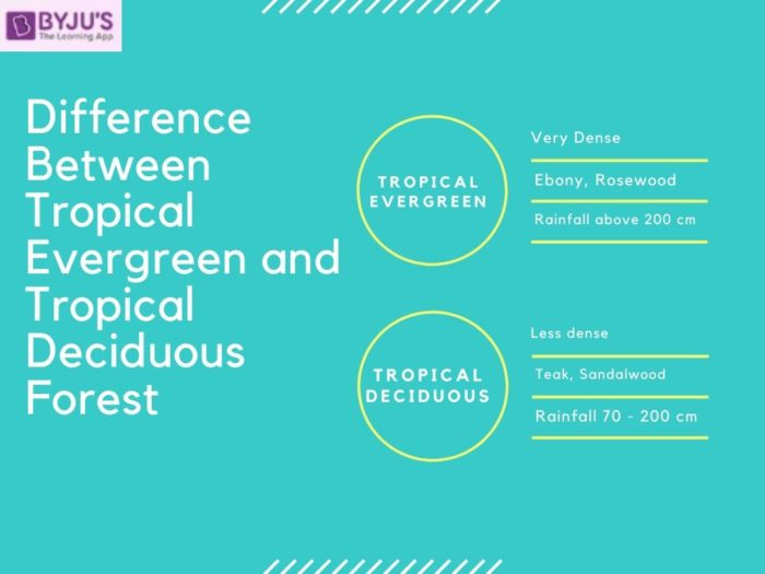 Difference between Tropical Evergreen and Tropical Deciduous Forest - Geography