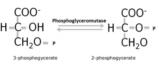 Isomerases
