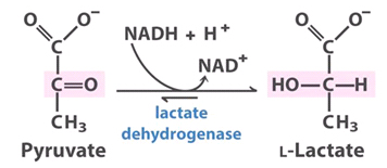 Oxidoreductases