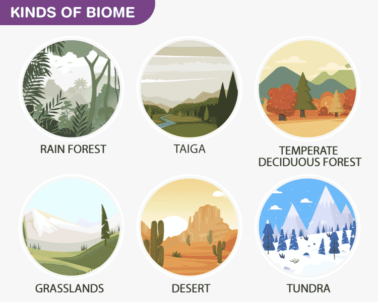 Kinds-of-Biome