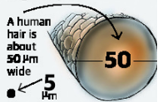 Image showing 5 µm and human hair width (50 µm)