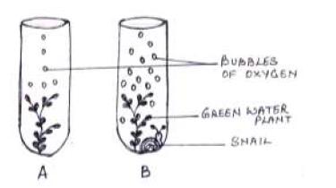 ICSE Class 10 Biology Qs Paper 2015 Solution-2