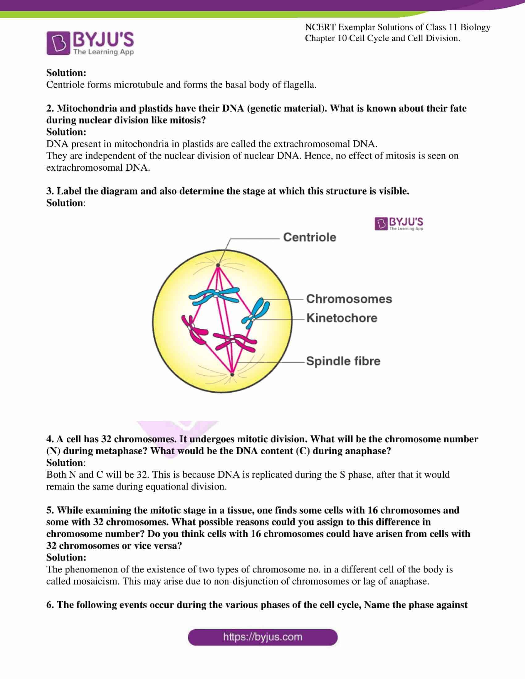 ncert exemplar solutions for class 11 bio chapter 10 5