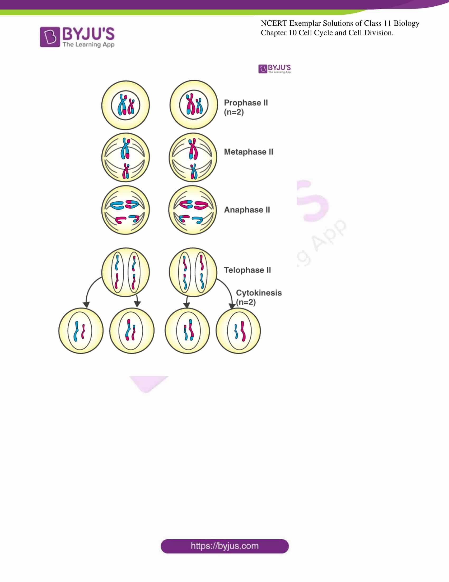 ncert exemplar solutions for class 11 bio chapter 10 9