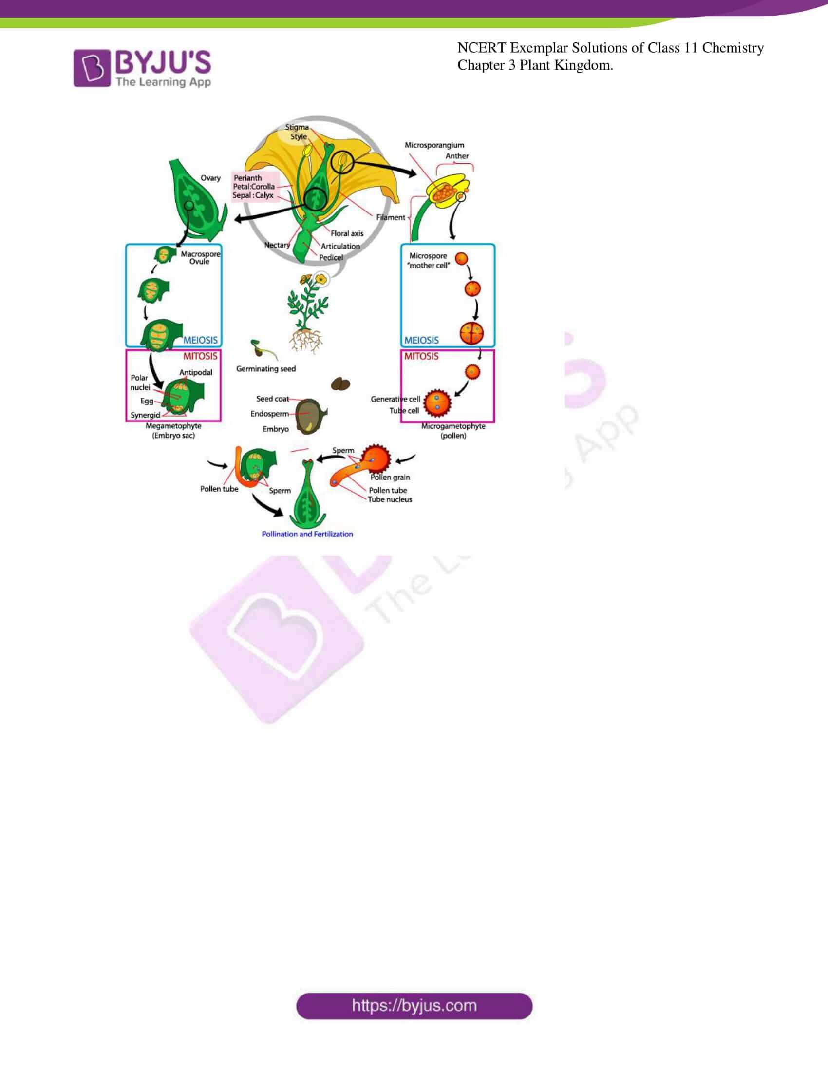 ncert exemplar solutions for class 11 bio chapter 3 9