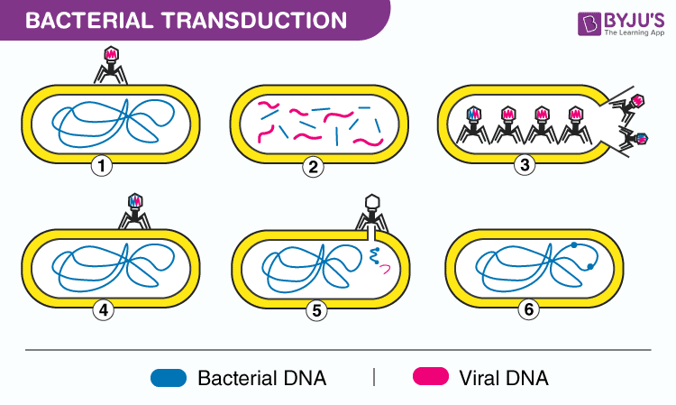 Bacterial Transduction