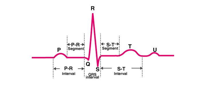 NCERT Exemplar Solution of Class 11 Biology Chapter 18 Body Fluids and Circulation-2