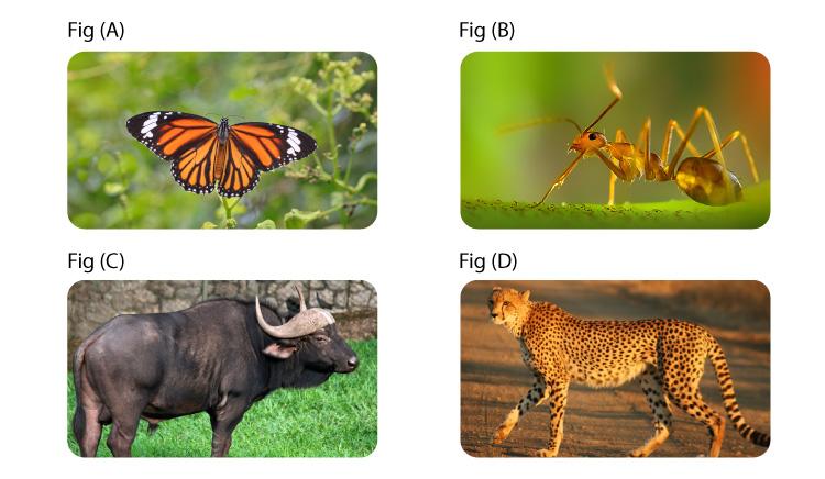 NCERT Exemplar Solution of Class 12 Biology Chapter 13 Organisms and Populations-3