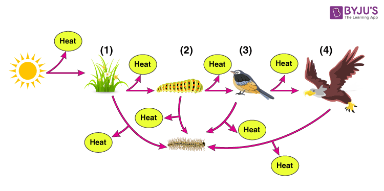 NCERT Exemplar Solution of Class 12 Biology Chapter 14 Ecosystem-2