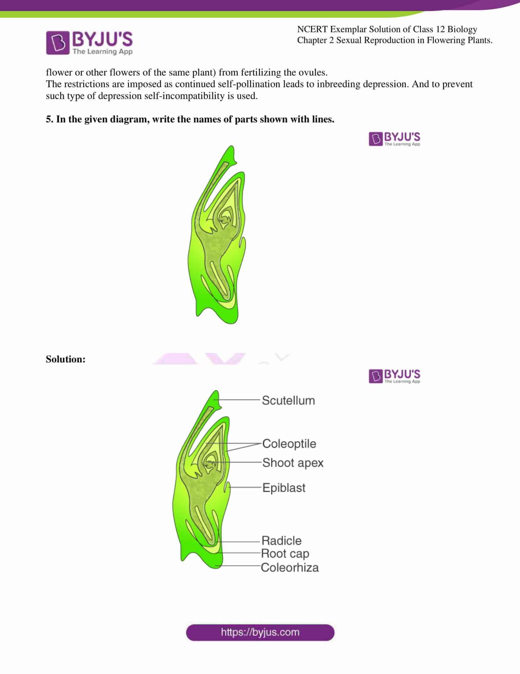 ncert exemplar solution of class 12 biology chapter 2 09