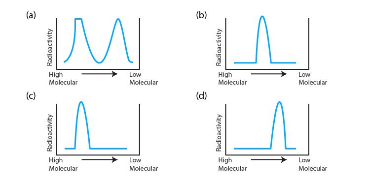 NCERT Exemplar Solution of Class 12 Biology Chapter 6 Molecular Basis of Inheritance-1
