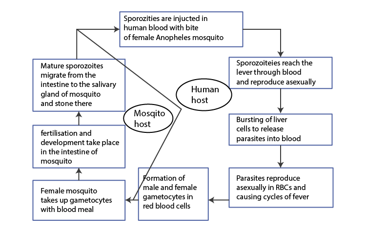 NCERT Exemplar Solution of Class 12 Biology Chapter 8 Human Health and Diseases-6