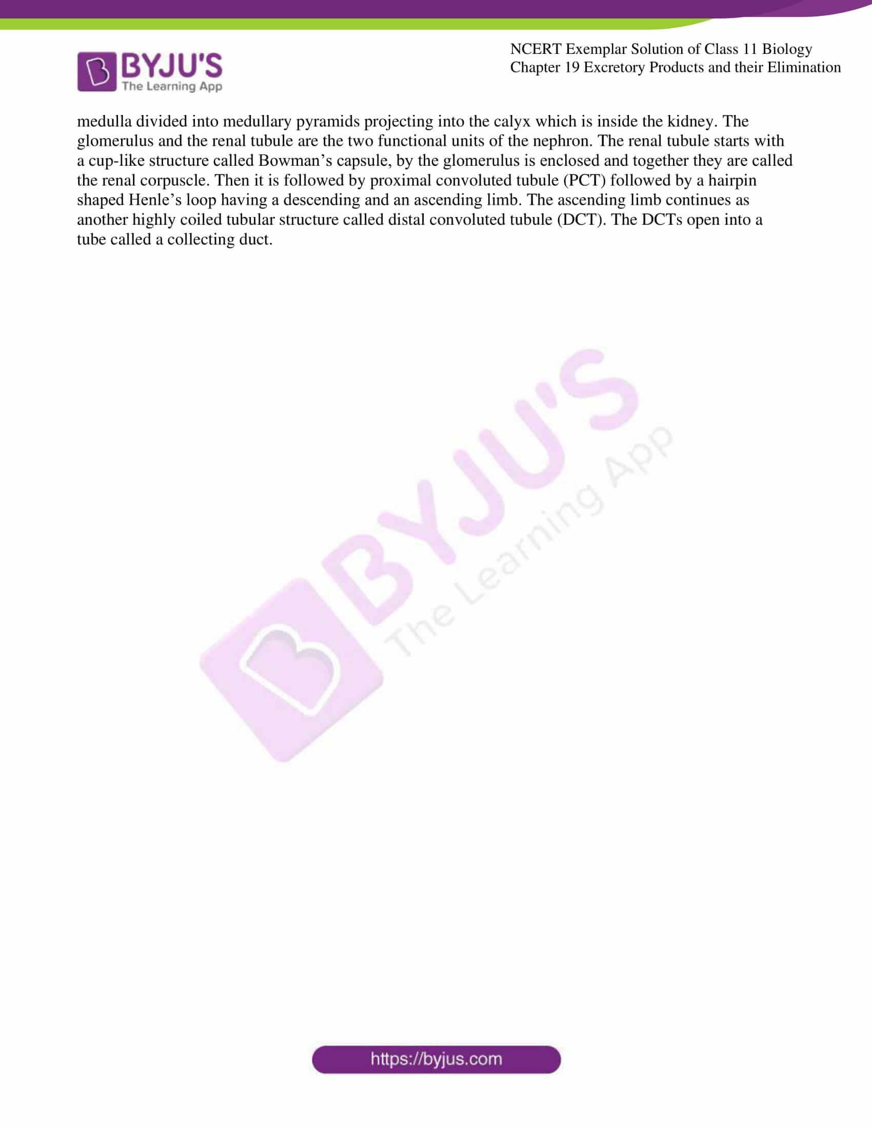 ncert exemplar solutions class 11 biology chapter 19 11