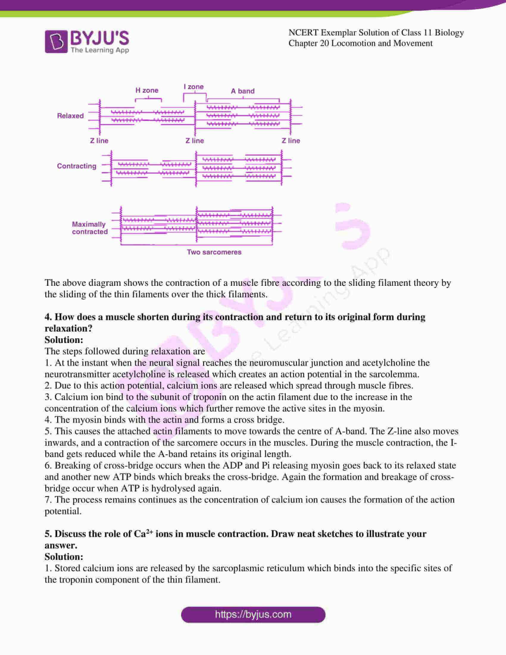 ncert exemplar solutions class 11 biology chapter 20 8