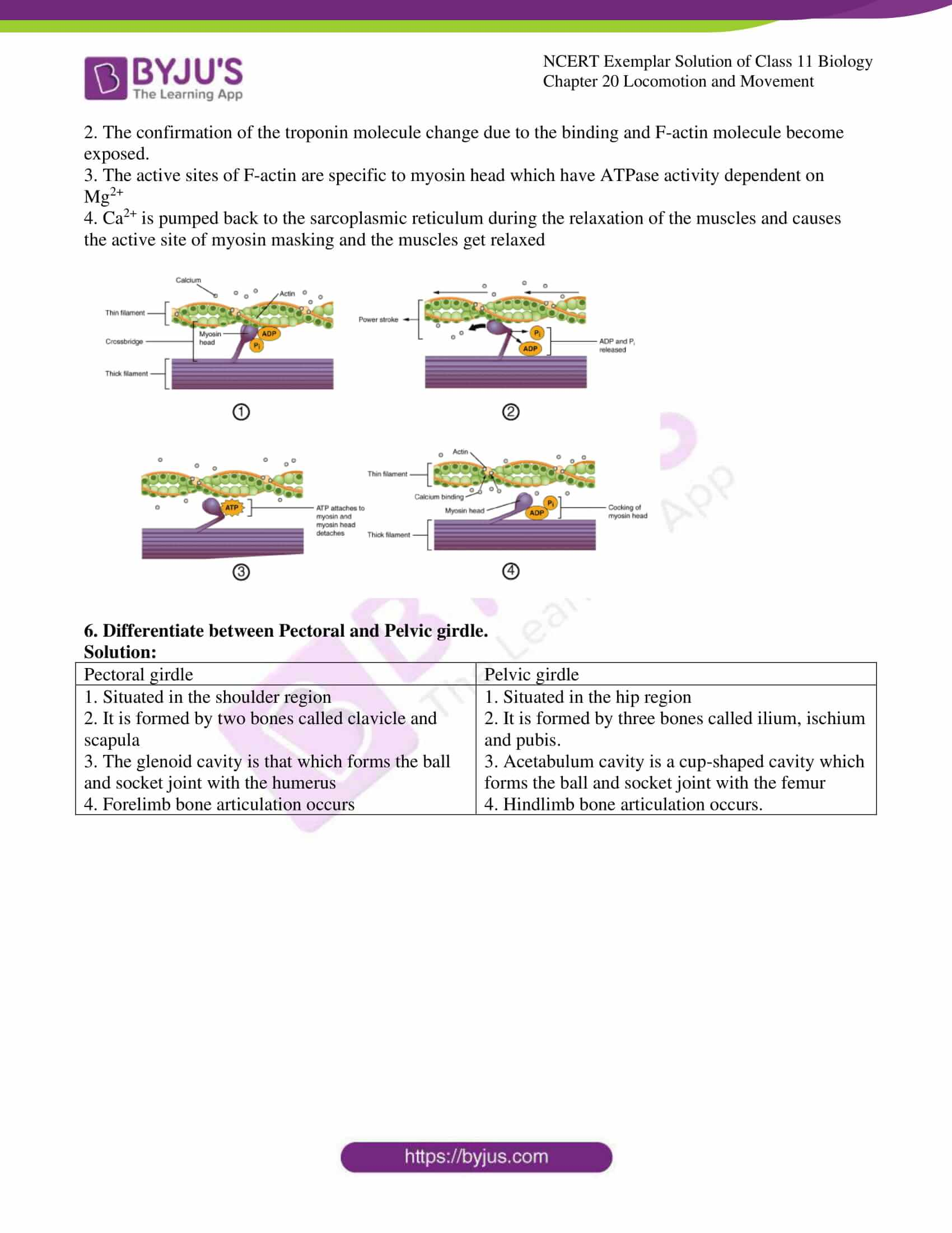 ncert exemplar solutions class 11 biology chapter 20 9