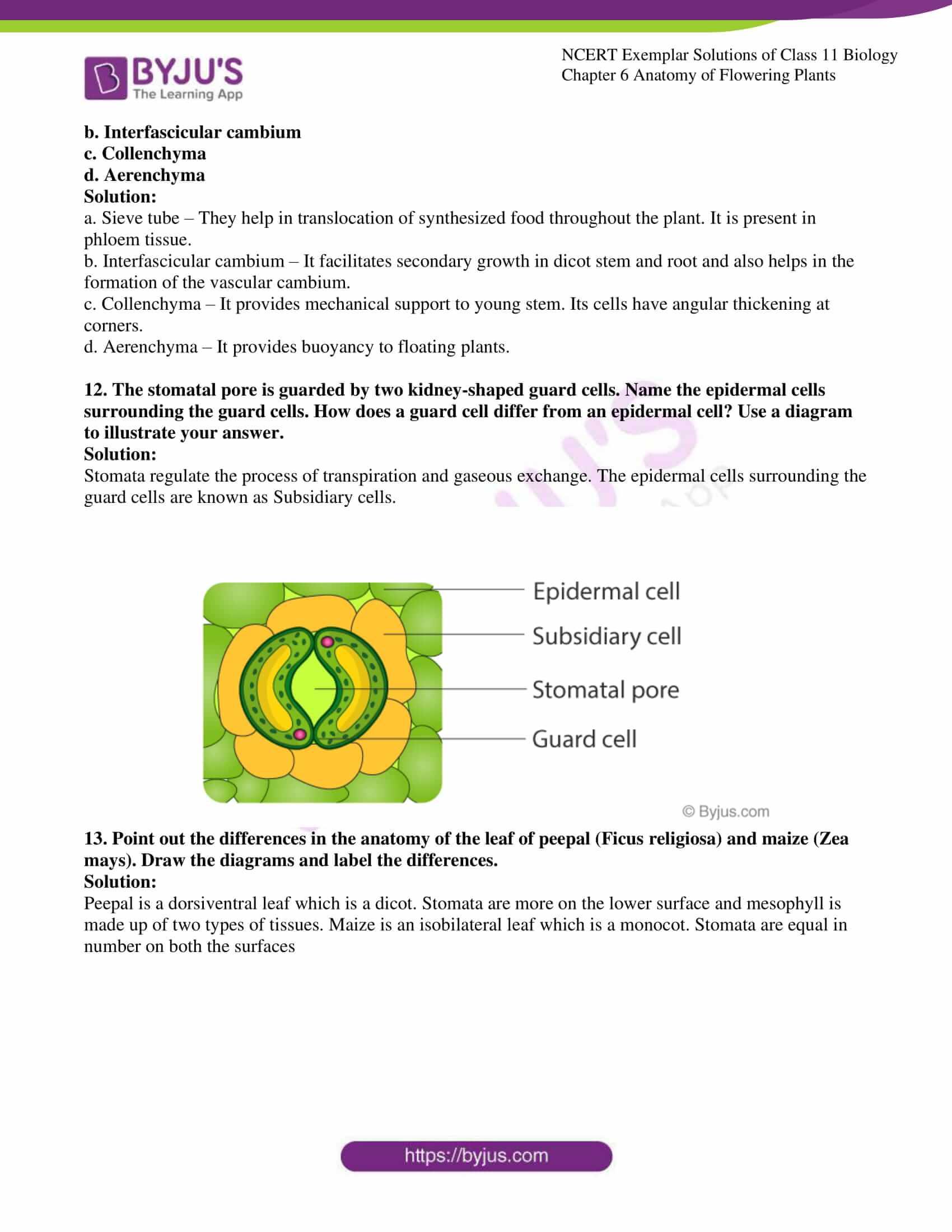 ncert exemplar solutions class 11 biology chapter 6 08