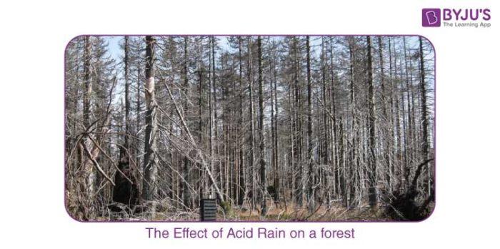 Acid rain effect on plants