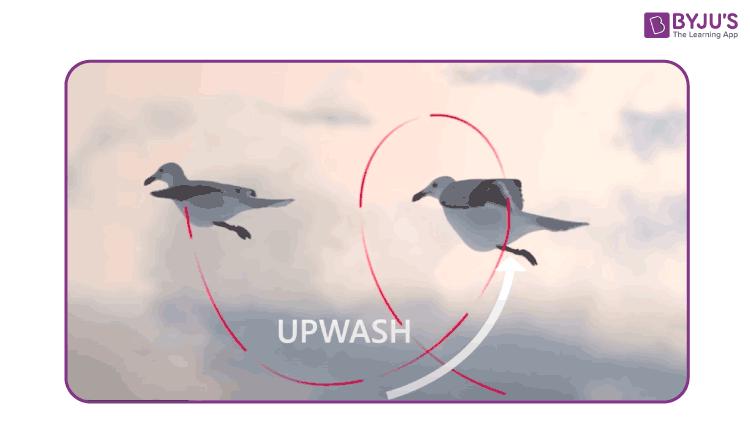 Upwash