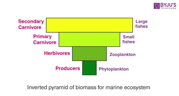 Pyramid of Biomass for Grassland Ecosystem