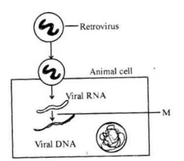 2019 Solved Paper KCET Biology