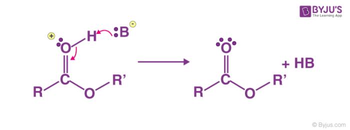 Fischer Esterification Mechanism Step 5