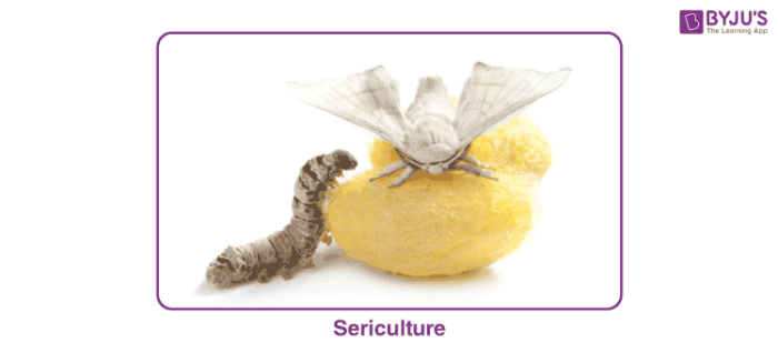 Types of Silkworm in Sericulture