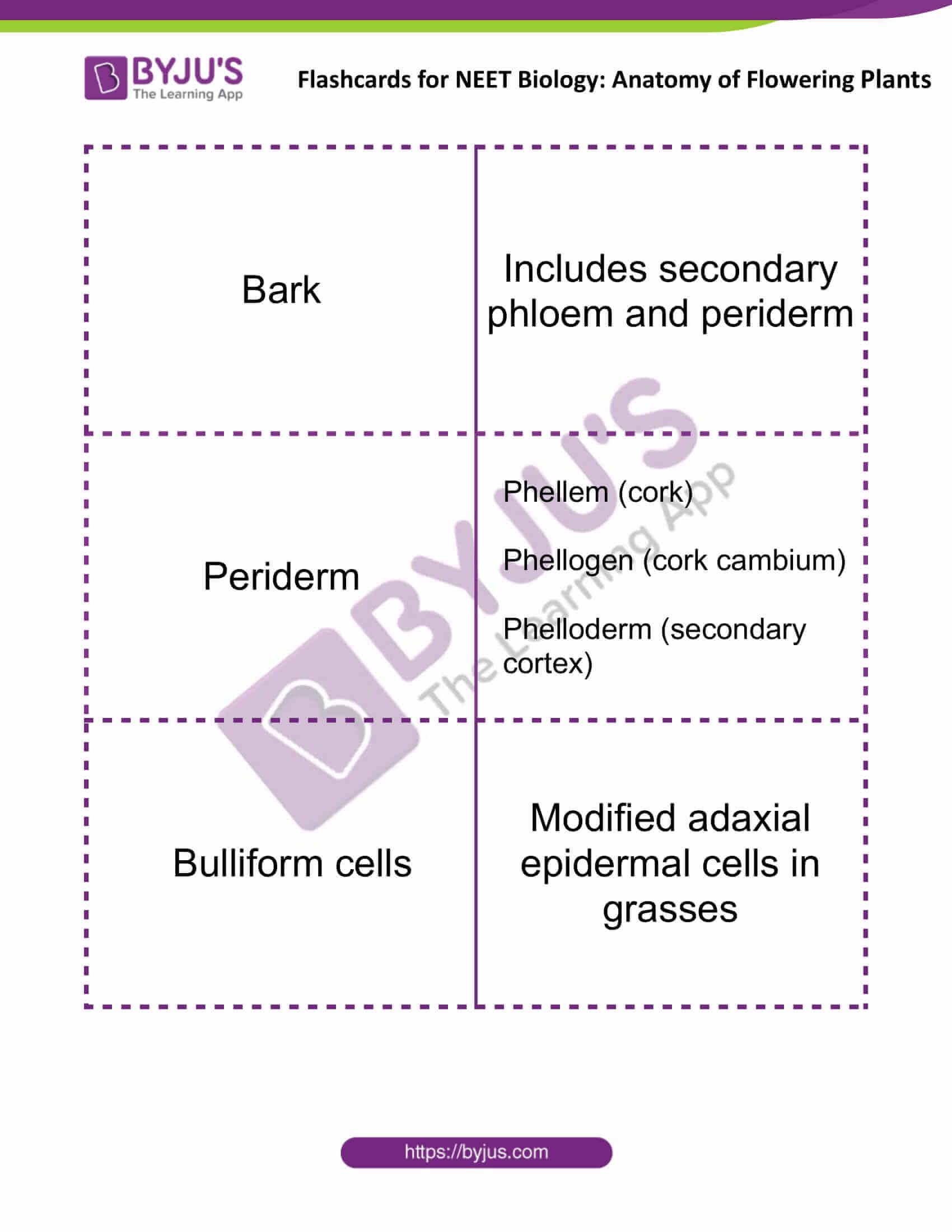 flashcards for neet biology anatomy of flowering plants 02