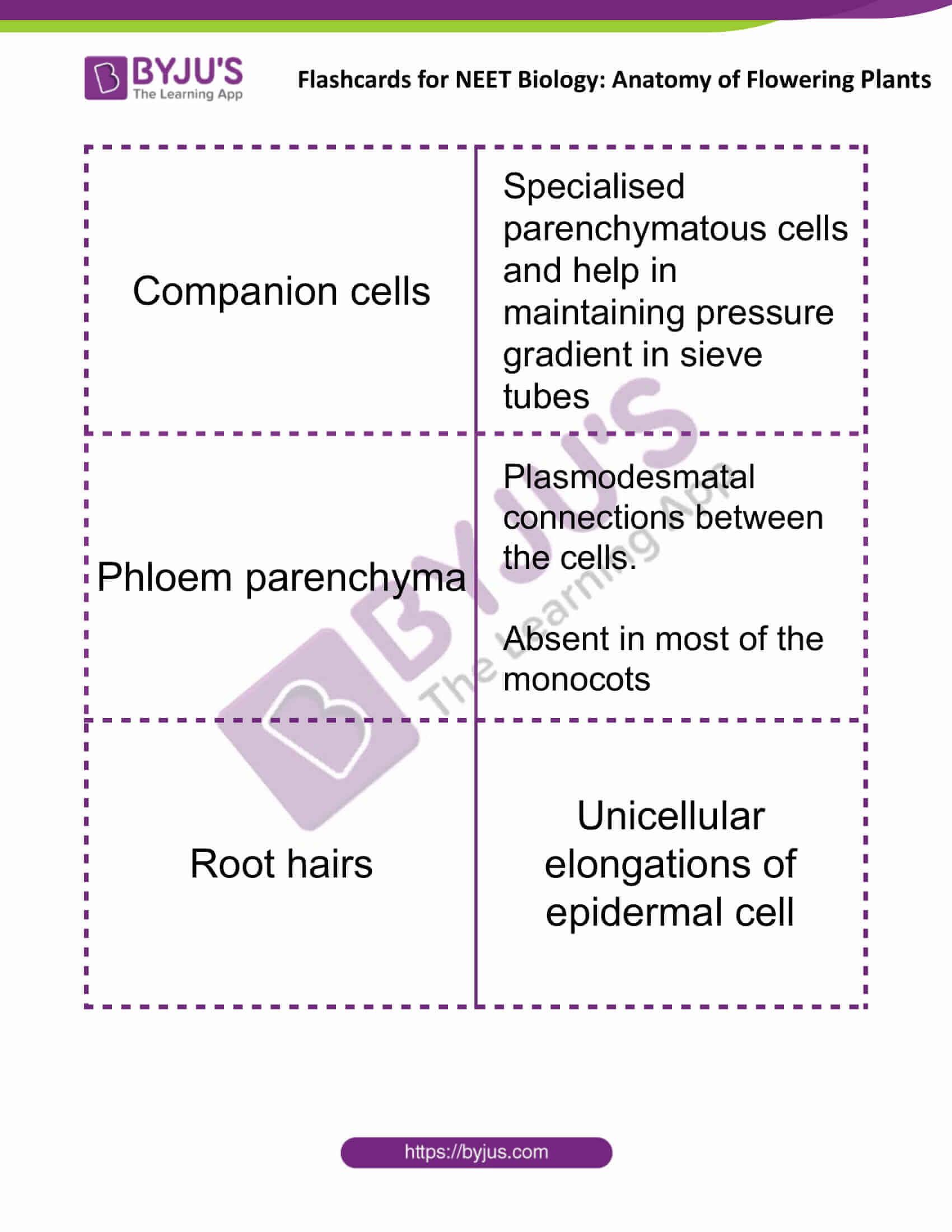 flashcards for neet biology anatomy of flowering plants 06