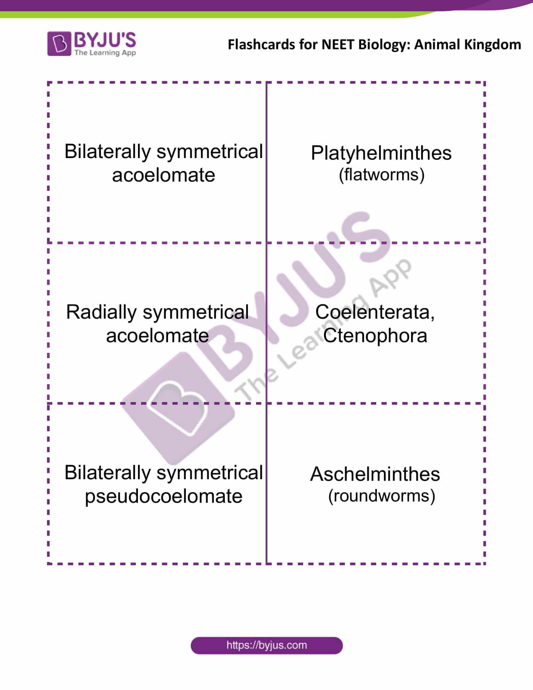 flashcards for neet biology animal kingdom 1
