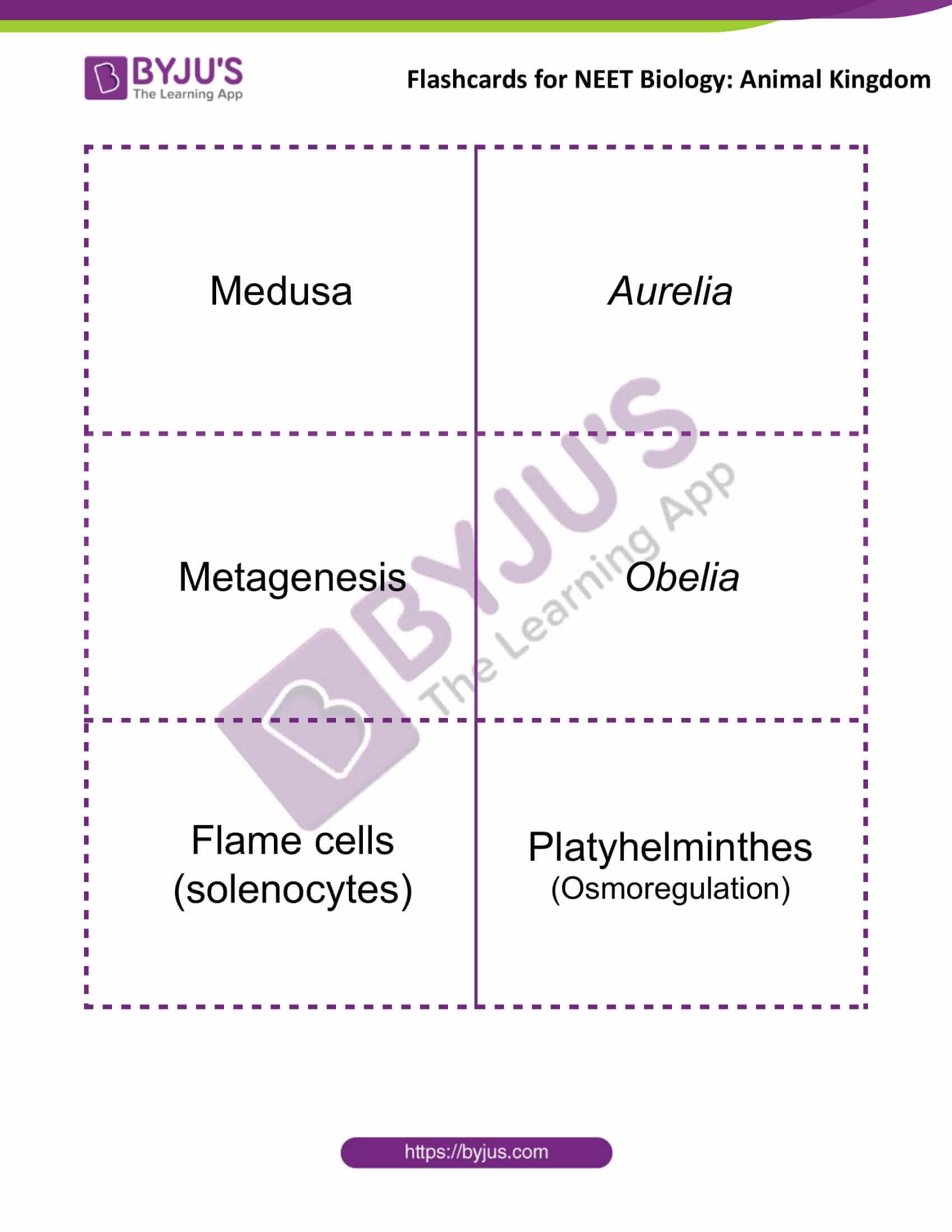 flashcards for neet biology animal kingdom 3