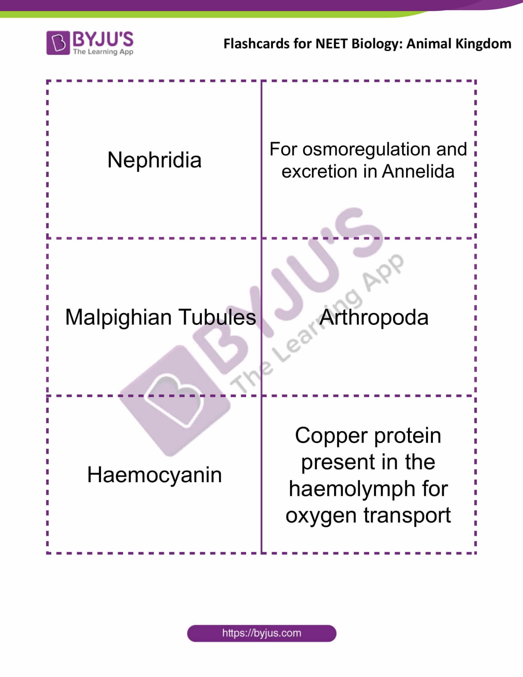 flashcards for neet biology animal kingdom 4