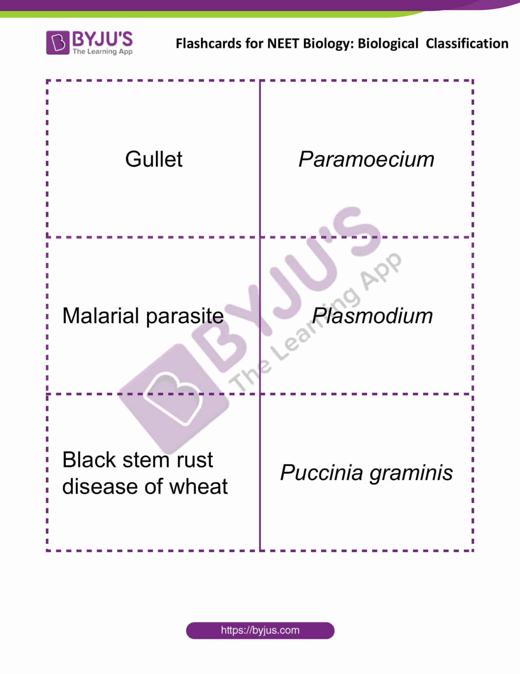 Flashcards for NEET Biological Classification 5