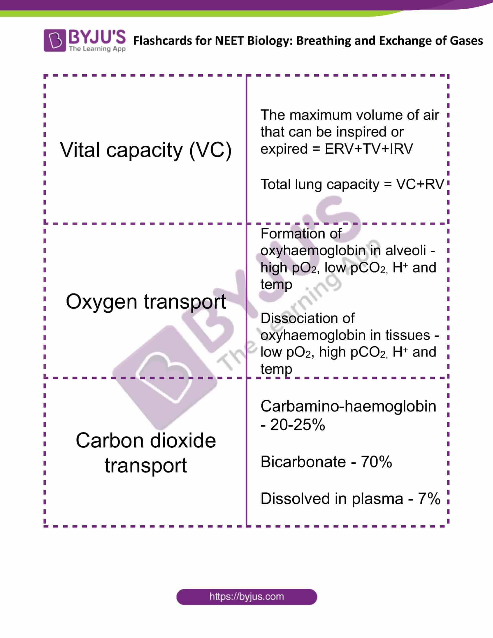 flashcards for neet biology breathing and exchange of gases 3