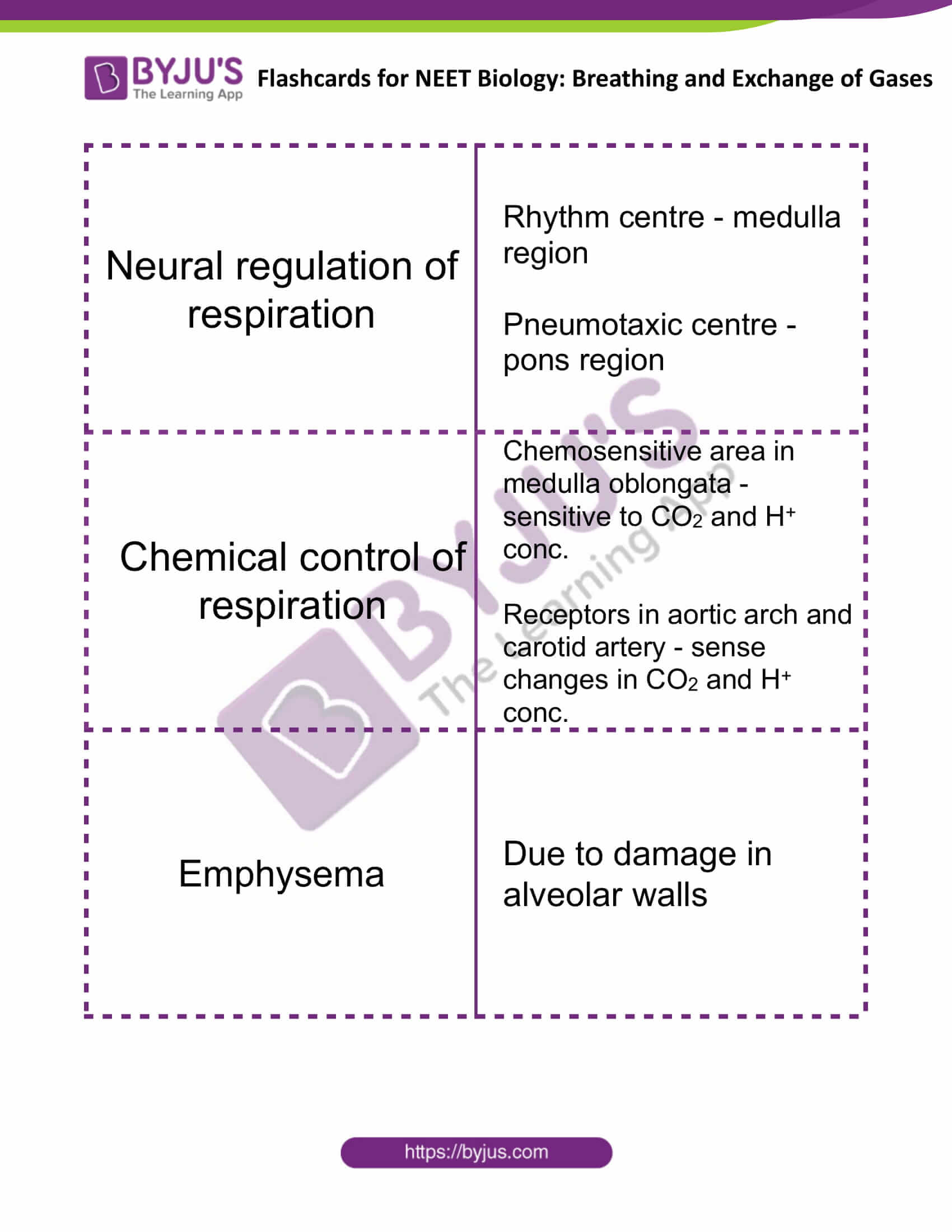 flashcards for neet biology breathing and exchange of gases 4