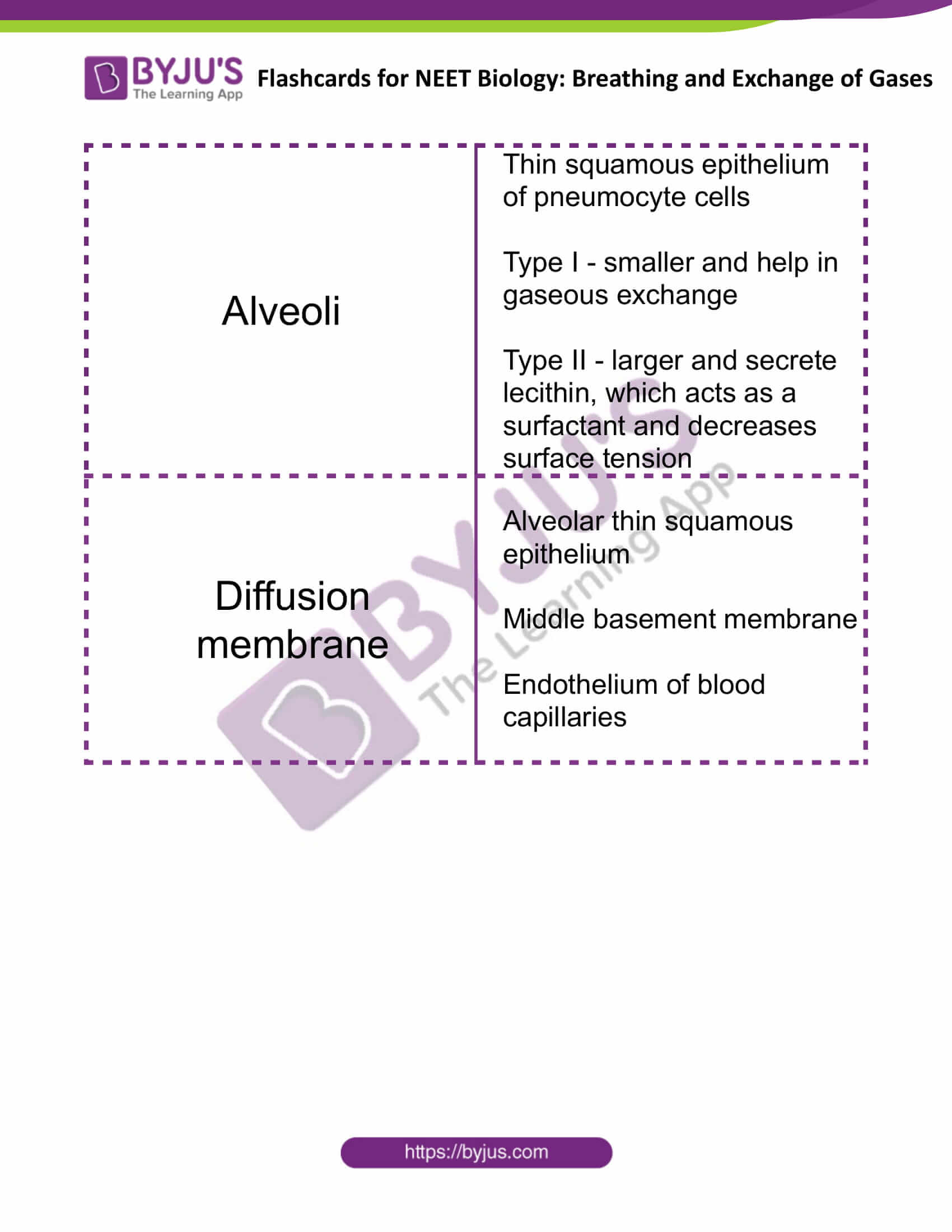 flashcards for neet biology breathing and exchange of gases 5
