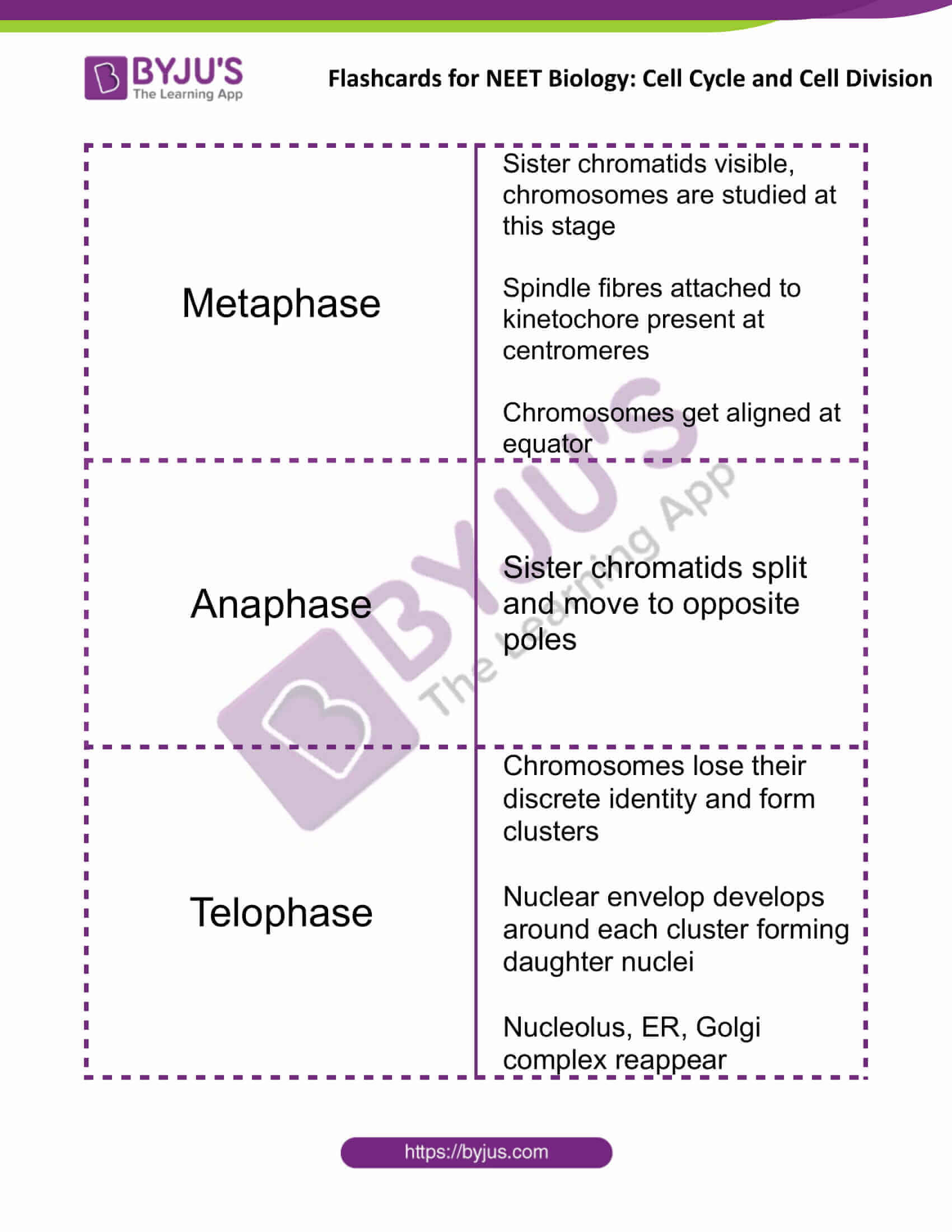 flashcards for neet biology cell cycle and cell division 3