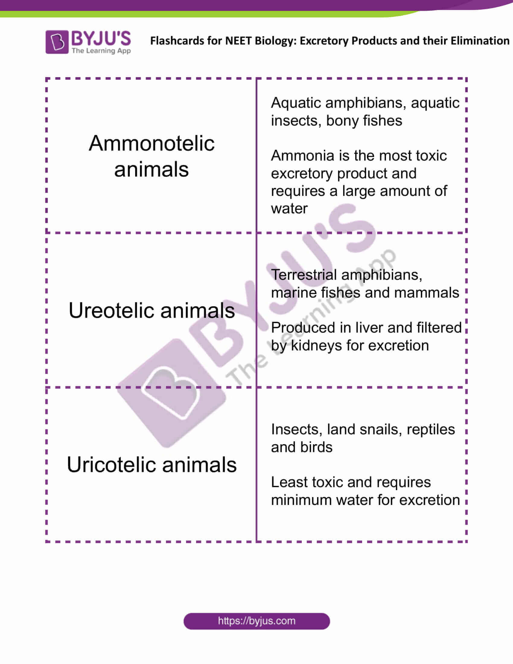 flashcards for neet biology excretory products and their elimination 1